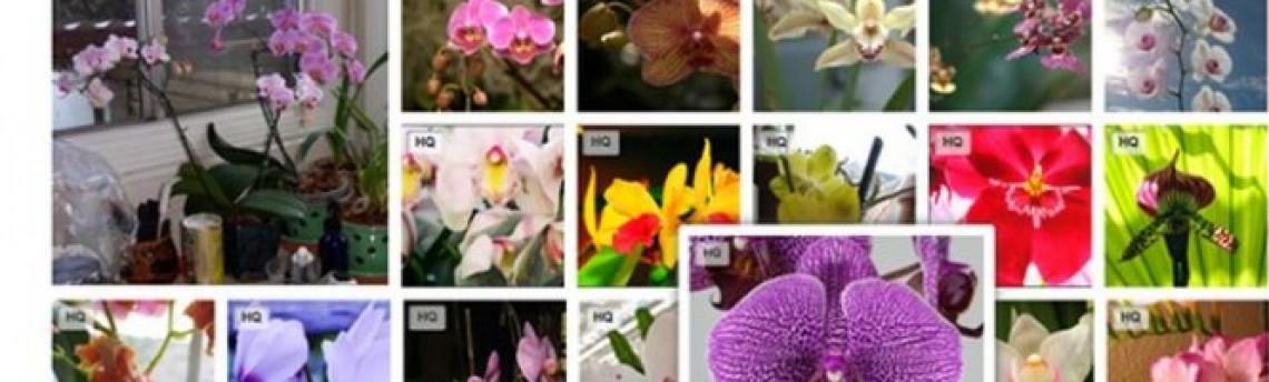 Yahoo inclui imagens do flickr em seus servicos de busca